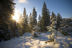 Sunlight in the forest royalty free stock photos