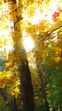 Sunlight in forest in autumn Royalty Free Stock Photos