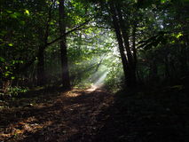 Sunlight in forest. The first sights of autumn Stock Images