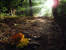 Sunlight in forest. The first sights of autumn Stock Photography