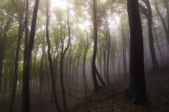Sunlight in a forest with fog after rain Stock Photo