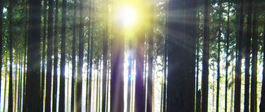 Sunlight in Forest. Stock Photo
