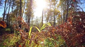 Sunlight. Forest Glade. The branches of the trees stock footage