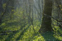 Sunlight in forest Royalty Free Stock Photo