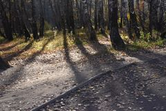 Sunlight forest stock photos