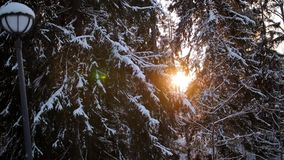 Sunlight in forest. Sun shine through tree branches covered with snow. Sun shines in winter woods. Sunlight in forest. Sun shine through tree branches covered stock video footage