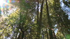 Sunlight in the forest stock video footage