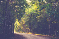 Sunlight Forest Royalty Free Stock Photos