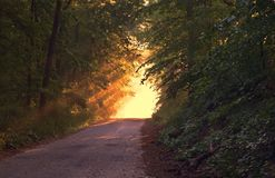 Sunlight, Forest, Way, Path Royalty Free Stock Photography