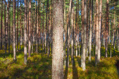 Sunlight in forest. Stock Photos