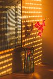 Sunlight forming patterns through shutters on a large window and stock image