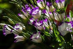 Sunlight of garden flower Royalty Free Stock Images