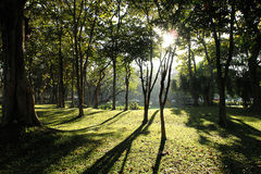 Sunlight in garden morning. Sunlight morning shadows reflecting tree on garden stock images