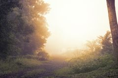 A sunlight in the garden. On morning Stock Images