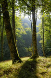 Sunlight on a glade Stock Images