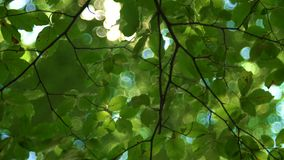 Sunlight glowing through the tree leaves in the forest stock video