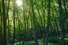 Sunlight goes through green leaves Stock Image