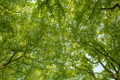 Sunlight goes through green leaves Stock Images