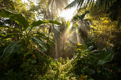 Sunlight goes through green leaves of tropic forest Stock Images