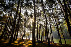 Sunlight with green forest Royalty Free Stock Images