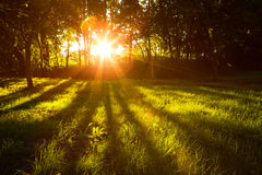 Sunlight green forest in summer time Stock Photos