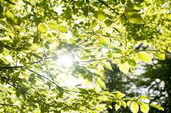 Sunlight and green leaves Stock Photos