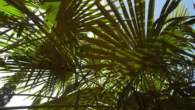 Sunlight through the green palm leaves on black sea, hd video stock video footage