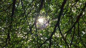 Sunlight through the green tree branches stock video