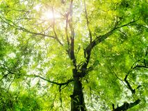 Sunlight through the green trees Royalty Free Stock Photo
