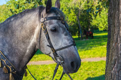 Sunlight in a grey horse eye Stock Images