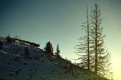 Sunlight on the hillside Stock Photography