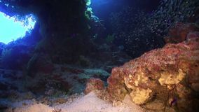 Sunlight Illuminates a Underwater Cave stock video footage