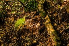 Sunlight illuminating a patch grass Stock Photo
