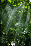 Sunlight in the Jungle Royalty Free Stock Photo