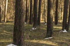 Sunlight in Latvian forest Stock Photo