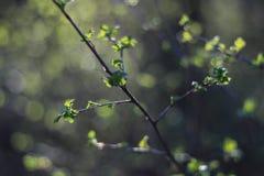 Sunlight in Latvian forest. Stock Photos