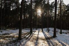 Sunlight in Latvian forest. Stock Image