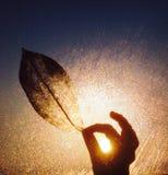 Misty sunlight leaf and fingertips. Fingertips holding irridescent leaf in sunlight misty stock photos