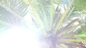 Sunlight through the leaves of palm trees at tropical. Closeup Sunlight through the leaves of palm trees at tropical stock footage