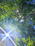 Sunlight through leaves in summer. Sunlight through leaves with blue sky in summer on the mountain of Appalachian trail that passing through Salisbury stock images