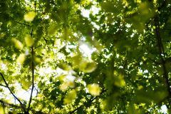 Sunlight through the leaves Stock Images