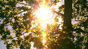Sunlight through the leaves Royalty Free Stock Photos