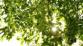 Sunlight through the leaves stock footage