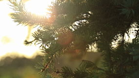 Sunlight and lens flare,tree leaves stock video footage