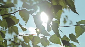 Sunlight and lens flare,tree leaves stock footage