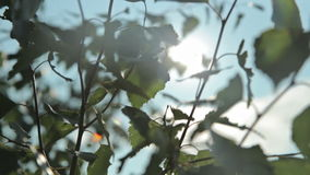 Sunlight and lens flare,tree leaves stock video