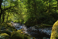 Sunlight lightens shadows along Tanner Creek in the Columbia River Gorge. Hiking along Tanner Creek to wahclella Falls in the Columbia River Gorge, sunlight Stock Image