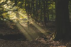 Sunlight lighting up the dark forest floor and tree roots in Amerongse Bos royalty free stock image