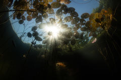 Sunlight and Lily Pads Underwater stock photo