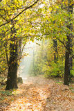 Sunlight lit footpath in autumn forest Royalty Free Stock Photography